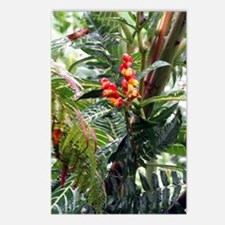 Tropical Flowers Postcards (Package of 8)