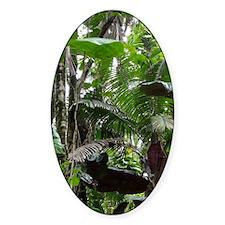 Tropical Rainforest01 Decal