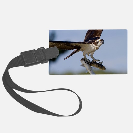 Showing Off Luggage Tag