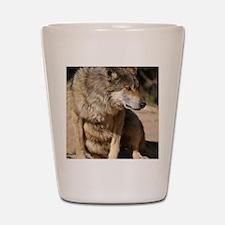 Mexican Wolf Portrait Shot Glass