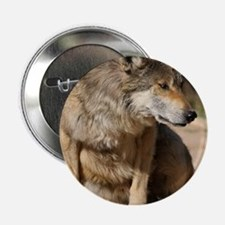 "Mexican Wolf Portrait 2.25"" Button"