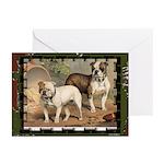 Bulldog Painting Greeting Cards(6)