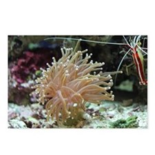 Torch Coral Postcards (Package of 8)