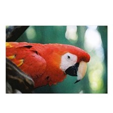 Scarlet Macaw series 1 Postcards (Package of 8)