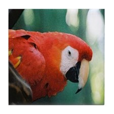 Scarlet Macaw series 1 Tile Coaster