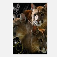 Cougars Postcards (Package of 8)