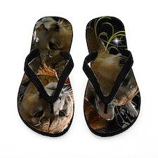 Cougars Flip Flops