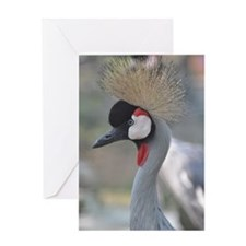 Africian Crowned Crane Greeting Card