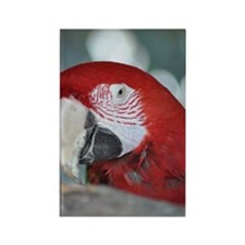Red-and-green Macaw (1) Rectangle Magnet