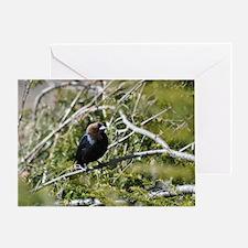 Brown Headed Cowbird Greeting Card