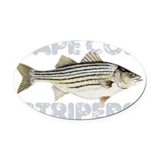 capecodstripers Oval Car Magnet