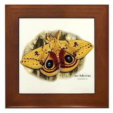 Io Moth Framed Tile