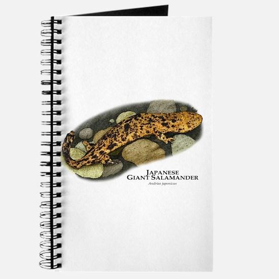 Japanese giant salamanders drawings
