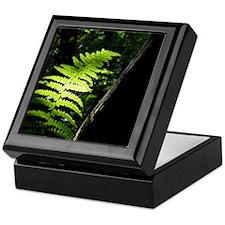 Woodland Fern - Keepsake Box