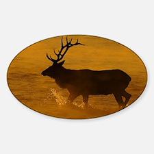 Bull Elk at Sunrise Decal