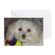 Toy Poodle's Toy! Greeting Card