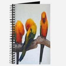 Sun Conure Journal
