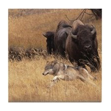 Bull Bison, Female, & Wolf Tile Coaster