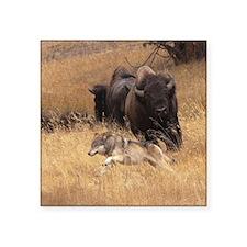 "Bull Bison, Female, & Wolf Square Sticker 3"" x 3"""
