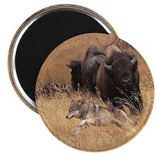 Bull Bison, Female, & Wolf Magnet