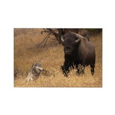 Bull Bison & Wolf Rectangle Magnet