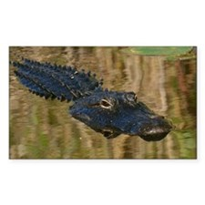 Alligator Swimming Decal
