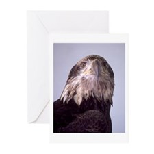 Spirit of the Eagle Greeting Cards Pack