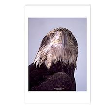 Spirit of the Eagle Postcard Pack