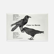 Crow vs. Raven - Rectangle Magnet