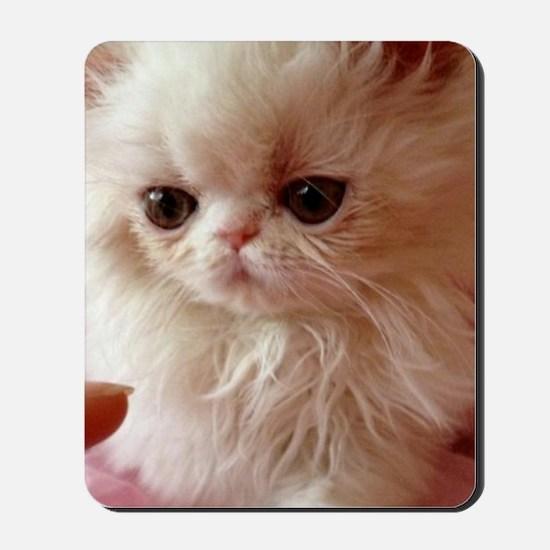 Baby Persian Kitten Mousepad