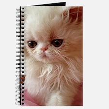 Baby Persian Kitten Journal