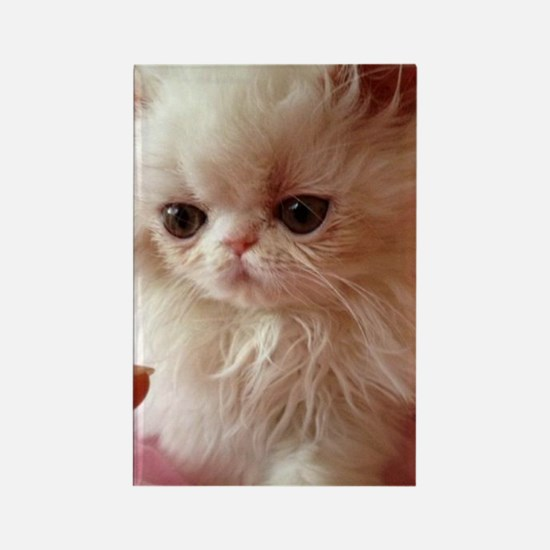 Baby Persian Kitten Rectangle Magnet