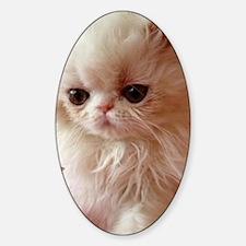 Baby Persian Kitten Decal