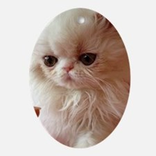 Baby Persian Kitten Oval Ornament