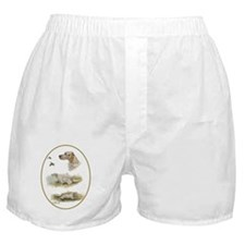 English setter Boxer Shorts