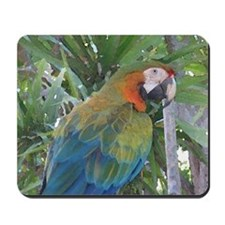 Harlequin Macaw Mousepad
