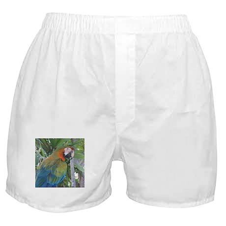 Harlequin Macaw Boxer Shorts