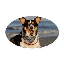 Cute Corgi Licking his Chops Oval Car Magnet