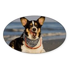 Cute Corgi Licking his Chops Decal