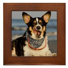 Cute Corgi Licking his Chops Framed Tile
