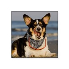 "Cute Corgi Licking his Chop Square Sticker 3"" x 3"""