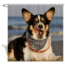 Cute Corgi Licking his Chops Shower Curtain
