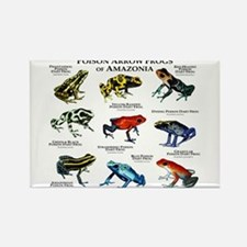 Poison Dart Frogs of Amazonia Rectangle Magnet