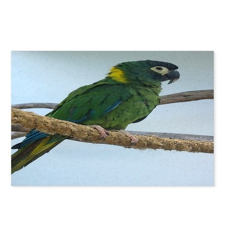 Yellow Collared Macaw Postcards (Package of 8)