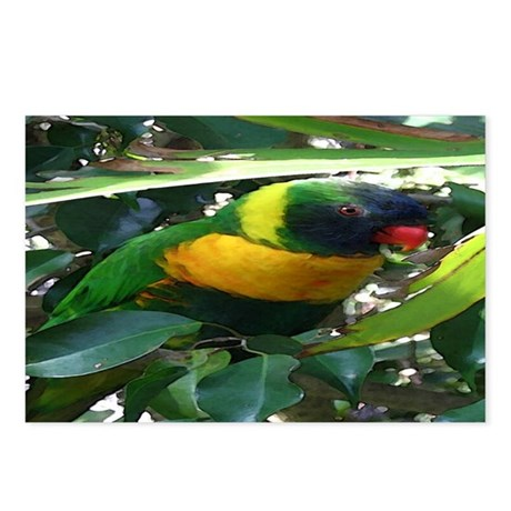 Lory Postcards (Package of 8)