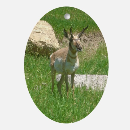 pronghorn Oval Ornament