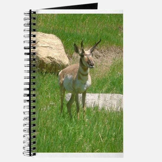 pronghorn Journal