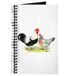 Dorking Chickens Journal