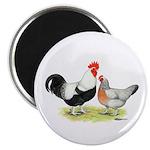 Dorking Chickens Magnet