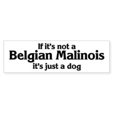 Belgian Malinois: If it's not Bumper Bumper Sticker